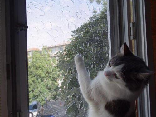 kedi sinekligi